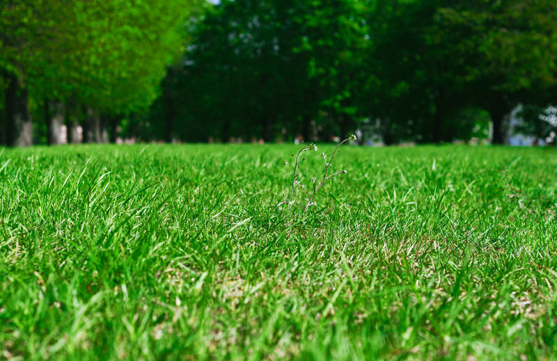 Surface level of grassy field
