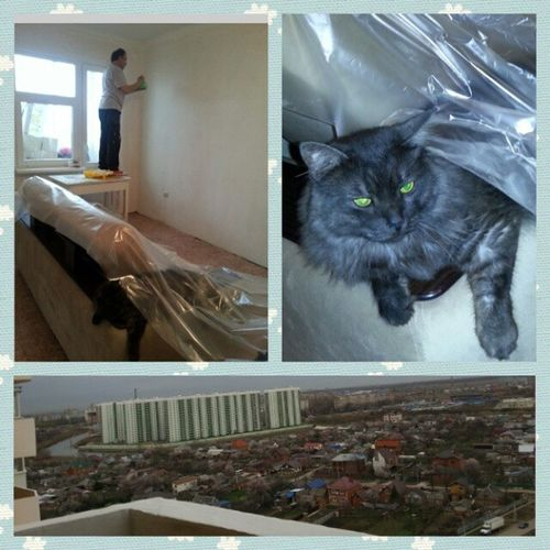 школаремонта кот -ремонтёр)), Cat помощник мау Бусек
