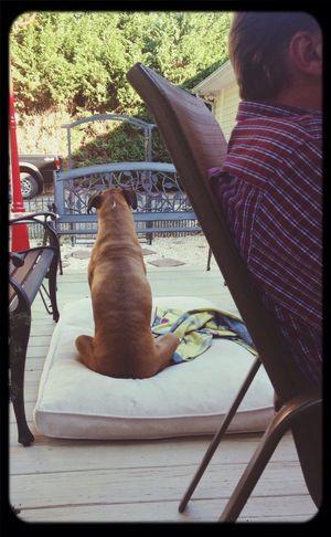 Boxer Dogs Ignoring Us Weird Pete