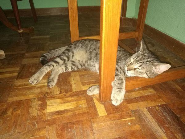 Como duerme.... Relaxing