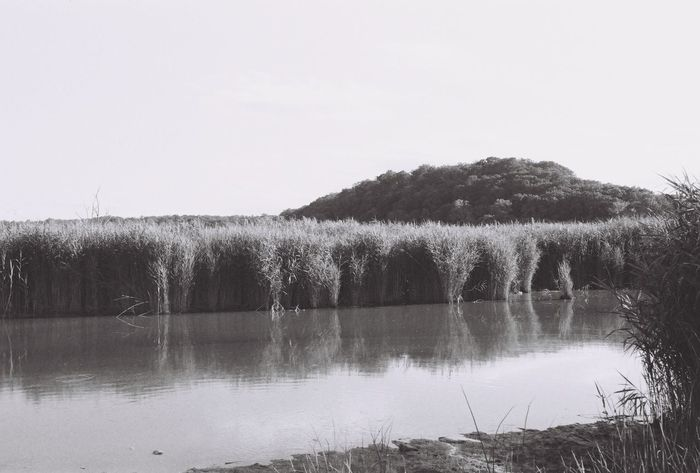 Water Lake Reflection Nature Outdoors Tranquility Tranquil Scene No People Day Tree Beauty In Nature Scenics Plant Grass Sky Perspectives On Nature Black And White Friday