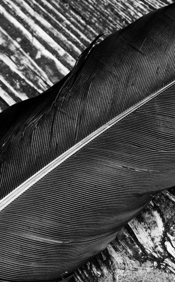 Study of a feather Close-up Day Outdoors Black And White No People Modern Curve Feather Of A Bird