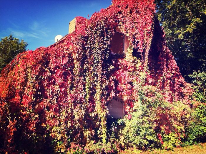 Indian Summer Colors Of Autumn Sun