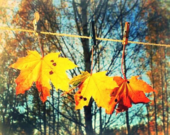 Autumn From My