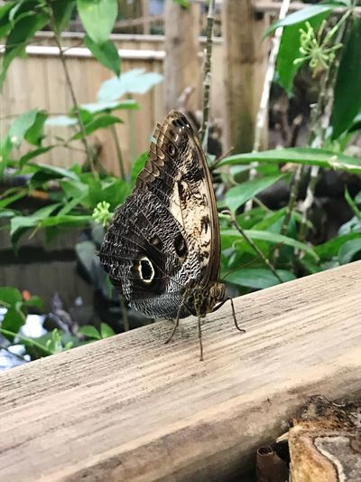 Butterfly Animal Themes Animal Wildlife Vertebrate Reptile Close-up Tree Nature Plant Outdoors Focus On Foreground No People Wood - Material Day Leaf Plant Part First Eyeem Photo