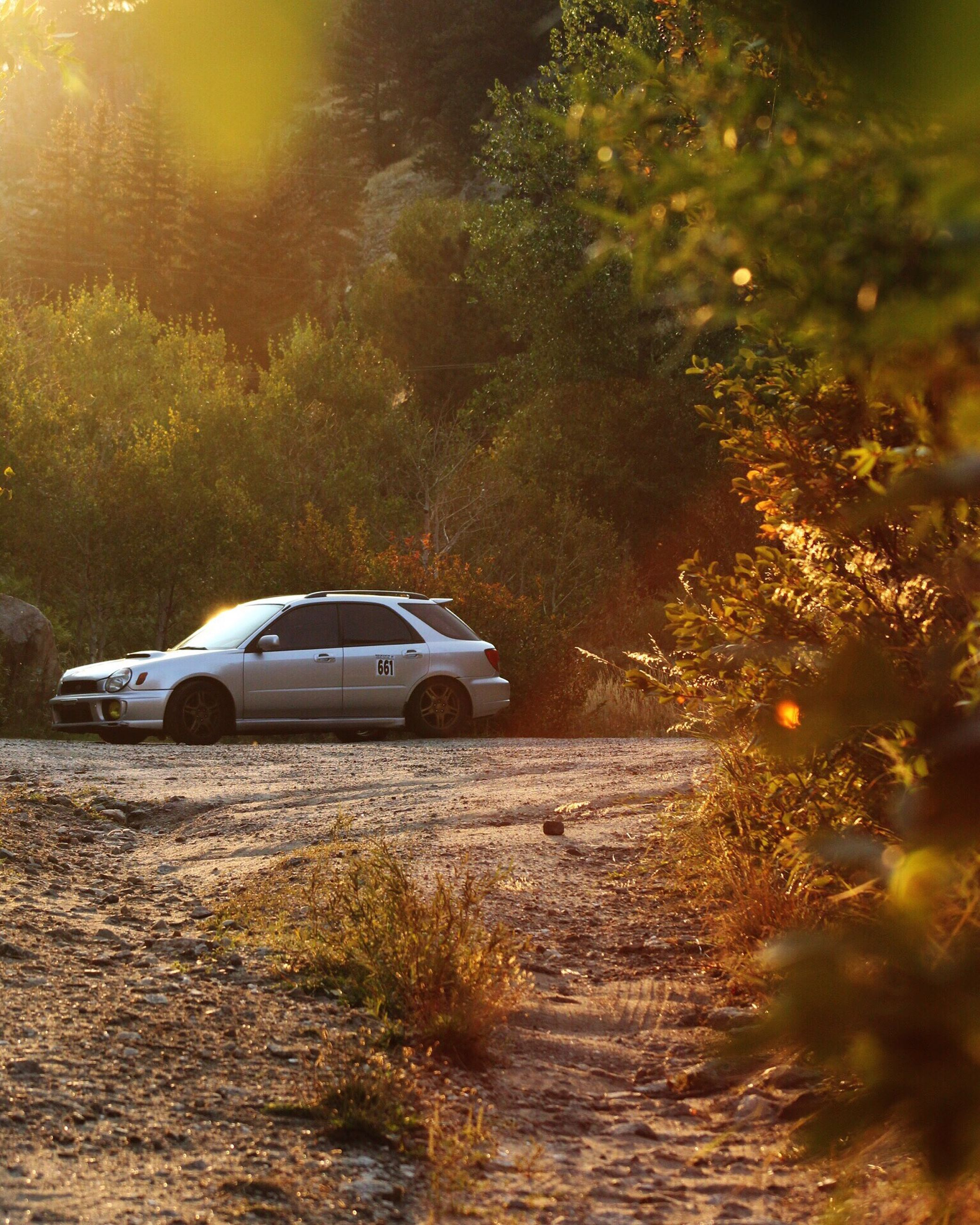 tree, car, transportation, no people, nature, forest, mode of transport, outdoors, beauty in nature, night