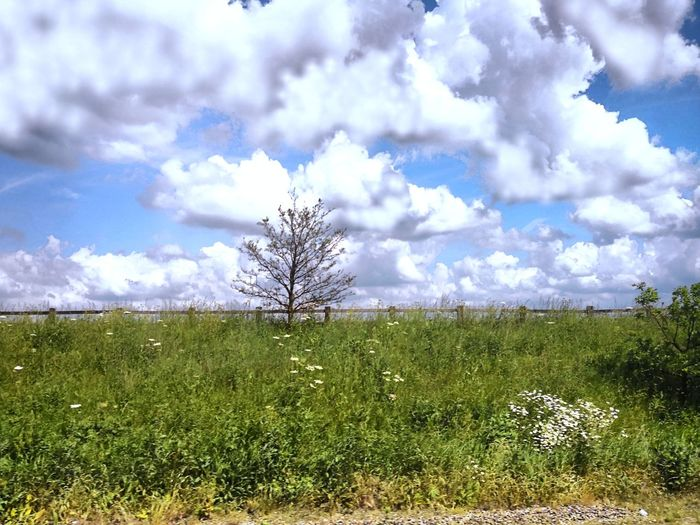 Cloudy sky Tree Rural Scene Agriculture Field Flower Sky Grass Landscape Cloud - Sky