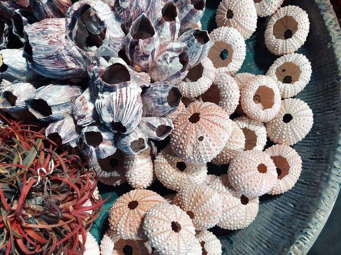 High angle view of dry barnacles and sea urchin in container
