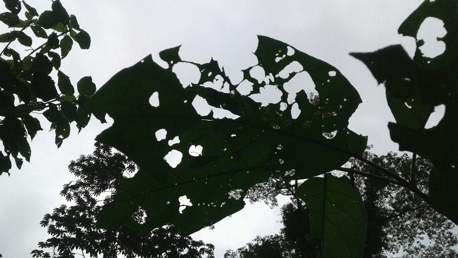 Sky Leaves🌿 Wormsareartists Nature