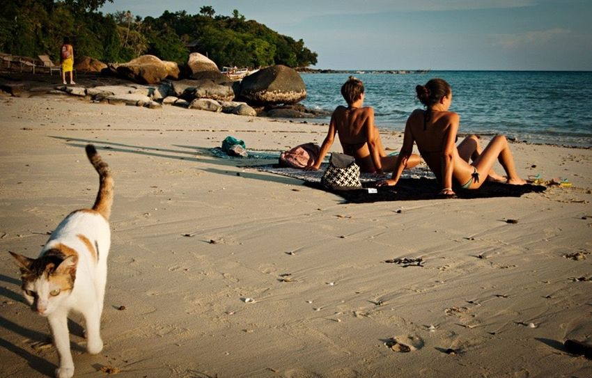Thailand Phiphidon Beach Cat Sunset Sun Peace Relax Relaxing Holiday
