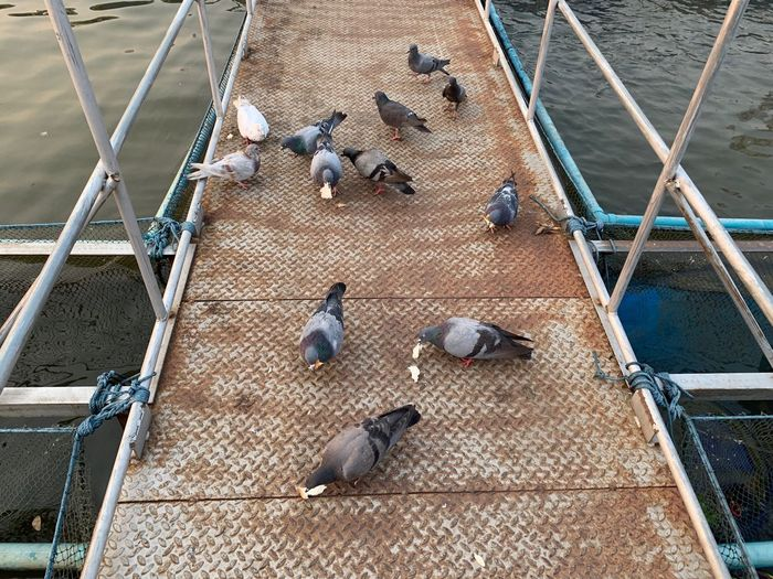 Group Of Animals Animal Bird Animal Themes Animal Wildlife Vertebrate High Angle View Animals In The Wild Pigeon Large Group Of Animals No People Perching Day Railing Architecture Outdoors Transportation Flock Of Birds Metal