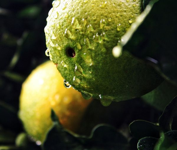 Close-up of raindrops on fruit