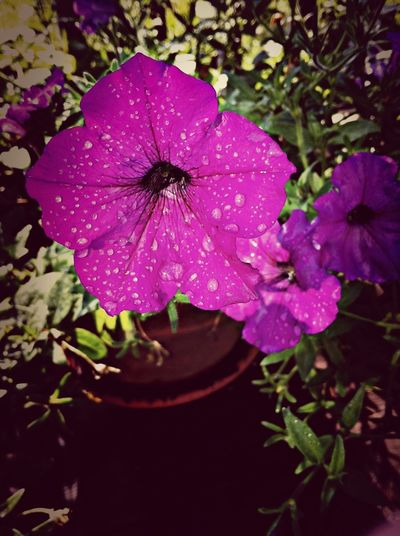 Water_collection Flowerporn Purple