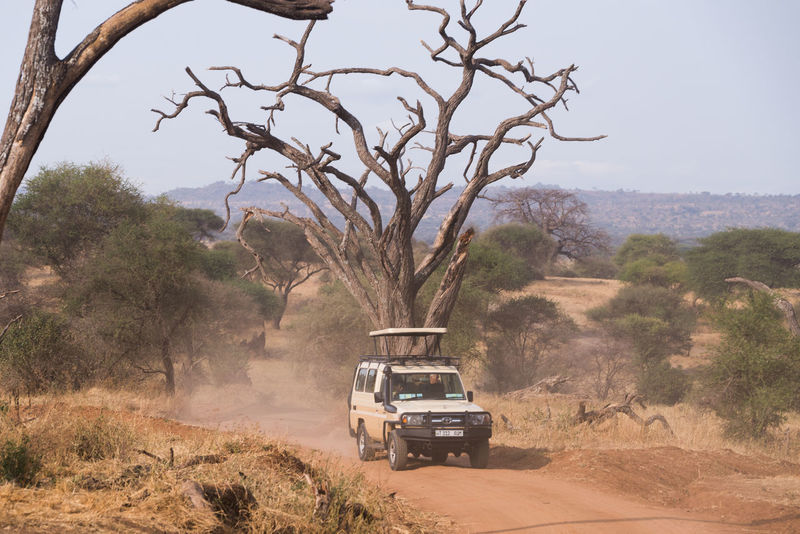 4x4 Game Drive Road Tanzania Taranto Adventure Arid Climate Car Day Dry Explorer Game Drive Jeep Land Vehicle Landscape Mode Of Transport Mountain Nature Off-road Vehicle Outdoors Real People Safari Transportation Tree
