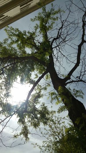 No Filters. The Purist (no Edit, No Filter) Tree_collection  Au Naturale