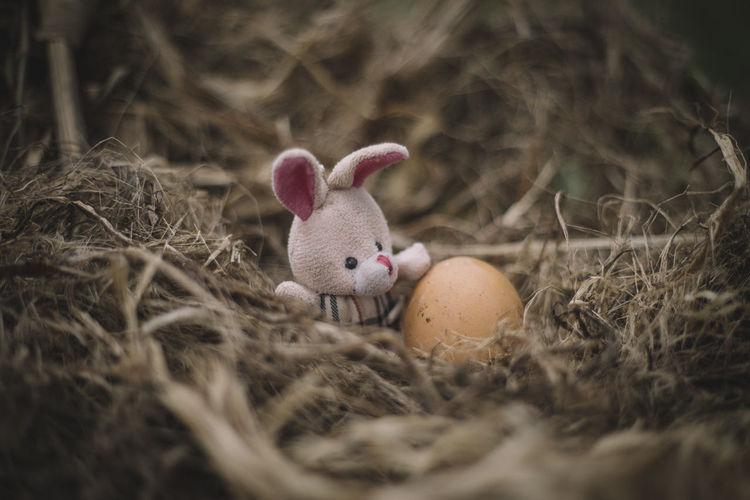 Bunny easter and egg