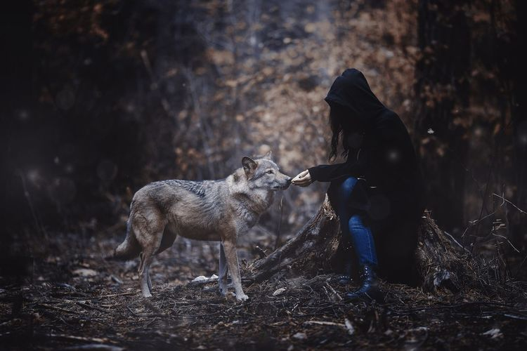 Full length of wolf on field in forest