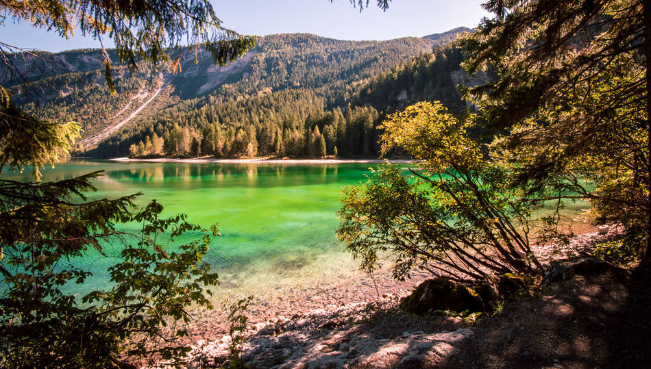 An amazing place : Tovel lake. Tree Tranquil Scene Scenics Water Tranquility Mountain Beauty In Nature Nature Lake Non-urban Scene Idyllic Majestic Calm Green Color Remote Outdoors WoodLand Trentino  Trentino Alto Adige Landscape
