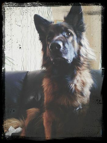 my beautiful dog♡