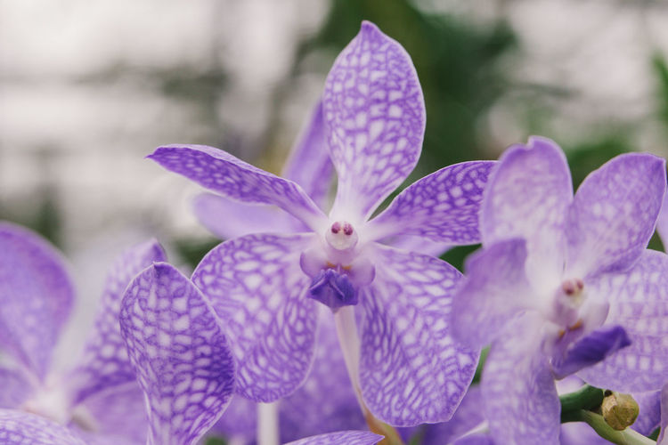Purple Orchid. Orchid Beauty In Nature Close-up Day Flower Flowering Plant Focus On Foreground Fragility Freshness Growth Nature Petal Plant Pollen Purple Selective Focus Vulnerability