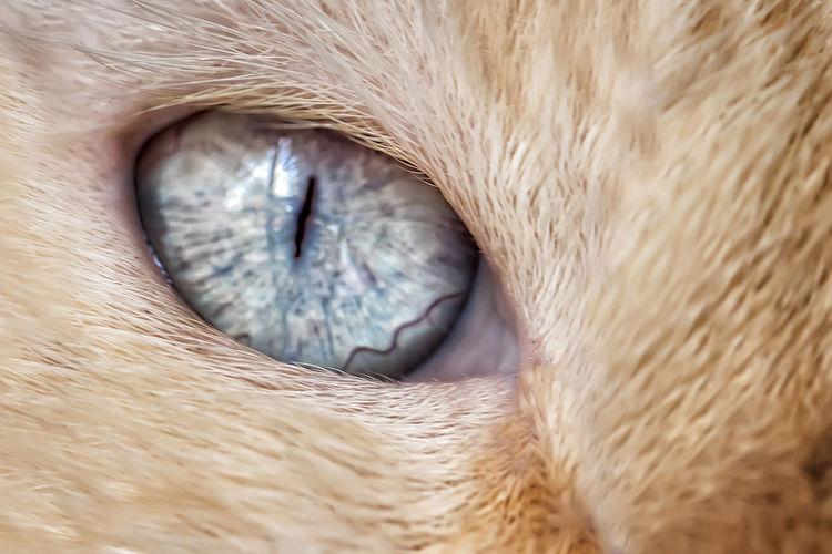 The Cat's Eye -