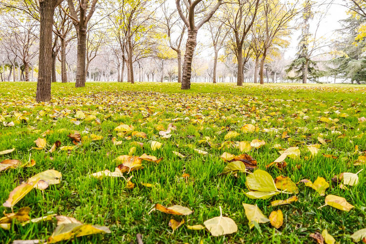 Grass level Autumn Autumn Leaves Beauty In Nature Day Field Flower Fragility Freshness Grass Green Color Growth Minimalism Nature No People Outdoors Outoors Scenics Serenity Tranquil Scene Tranquility Tree