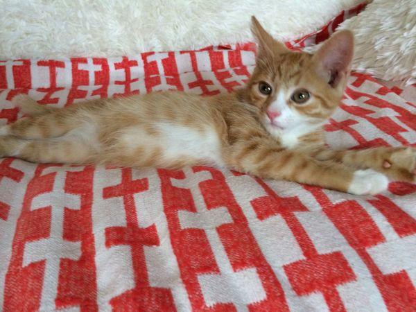 Мурзик котёнок рыжий кот милости