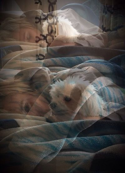 Domestic Animals Pets Dog Bed Relaxation Indoors  Animal Themes Mammal No People Bedroom Close-up Day Photographybybrookechanelle Snugglebuddy Sleeping Edited Artful Editing Experimental Photography Experimental Edit Photo Blending Pet Portraits