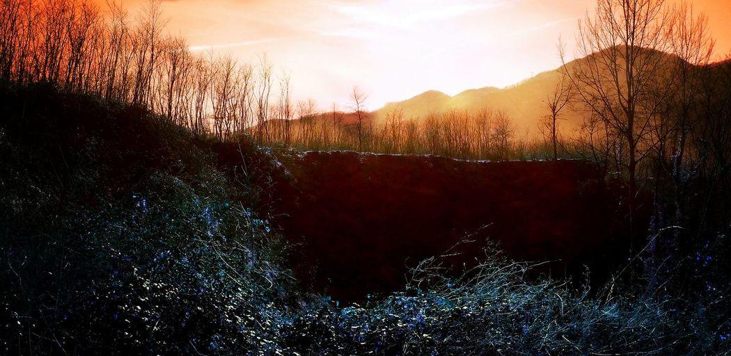 Italy Tuscany Ghivizzano Beautiful Nature Art Mixedmedia Trees Outdoors Nature_collection
