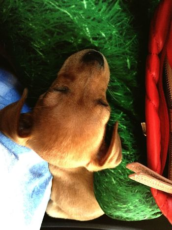 My Dog Are Cooler Than Your Kids My Dog <3 I Love My Dog I Love My Dog❤ Sweet Sleeping Puppy Cute Pets Green Grass