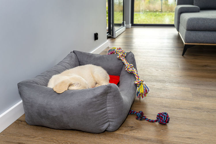 Dog lying on sofa at home
