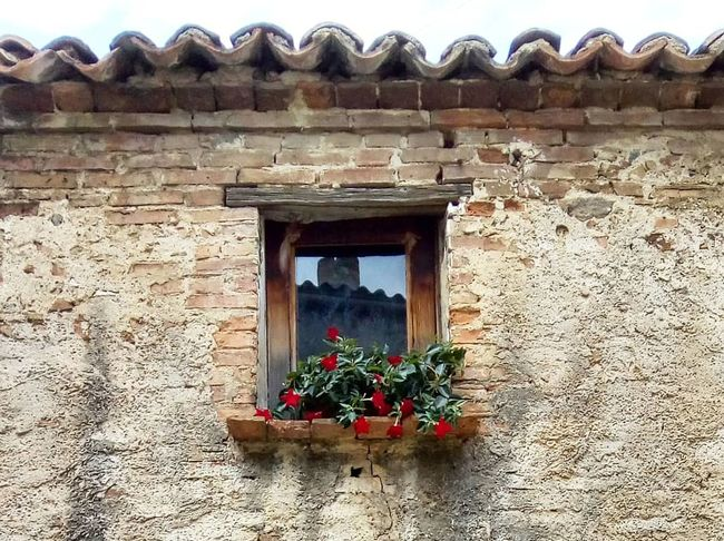 Windows reflection Flower Window Window Box History House Architecture Building Exterior Built Structure