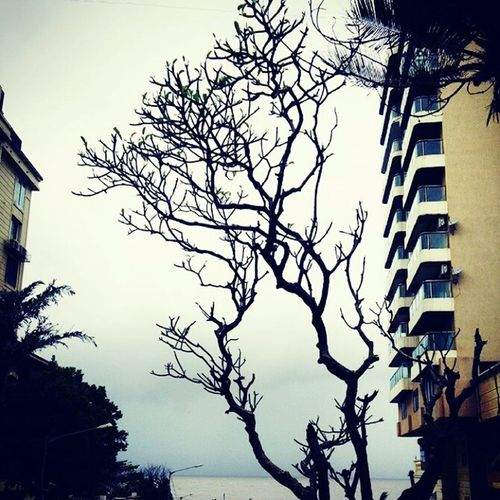 Winter Trees Nikongirl World Through My Eyes
