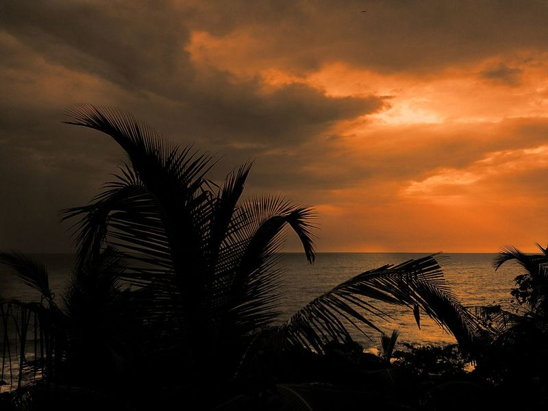 Kerala Atmospheric Mood Silence Of Nature Goldenhour EyeEm Nature Lover first eyeem photo Beach Sky And Clouds Sillhouette Evening Sunlight Happy New Year Sunset Palm Tree Sea Silhouette Tree Beach Sky Water Horizon Over Water Nature No People Outdoors