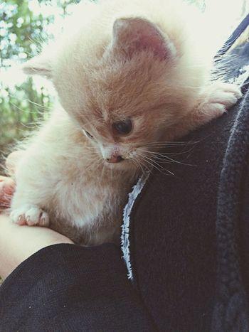 Lucky.?? Kitten IPhoneography Fluffy Cat