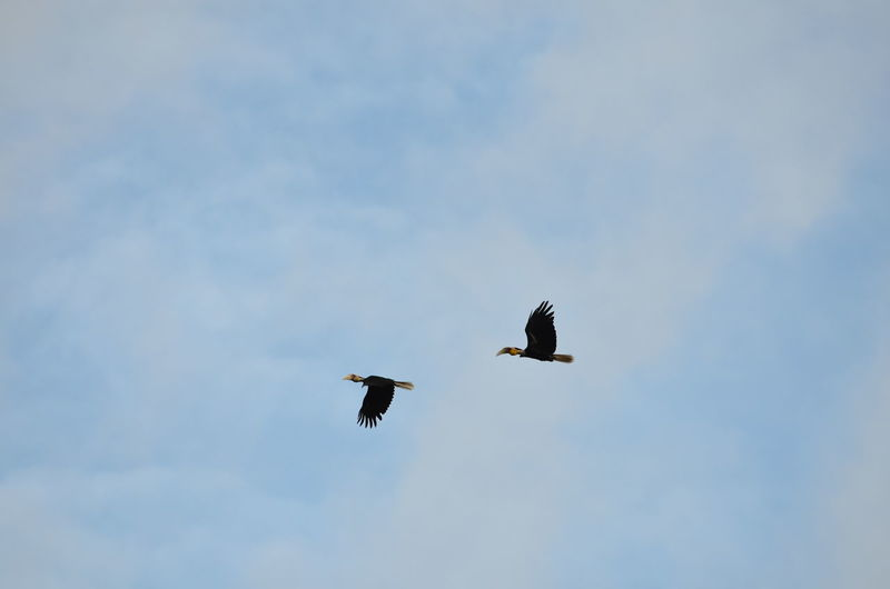 Animal Wildlife Animals In The Wild Animal Themes Animal Vertebrate Bird Flying Low Angle View Sky Spread Wings Group Of Animals No People Two Animals Mid-air Day Nature Eagle Outdoors Cloud - Sky Motion