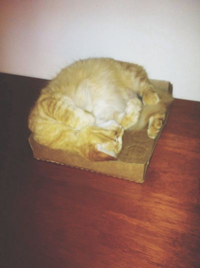 He loves this Box. Kitty Cat Fattie