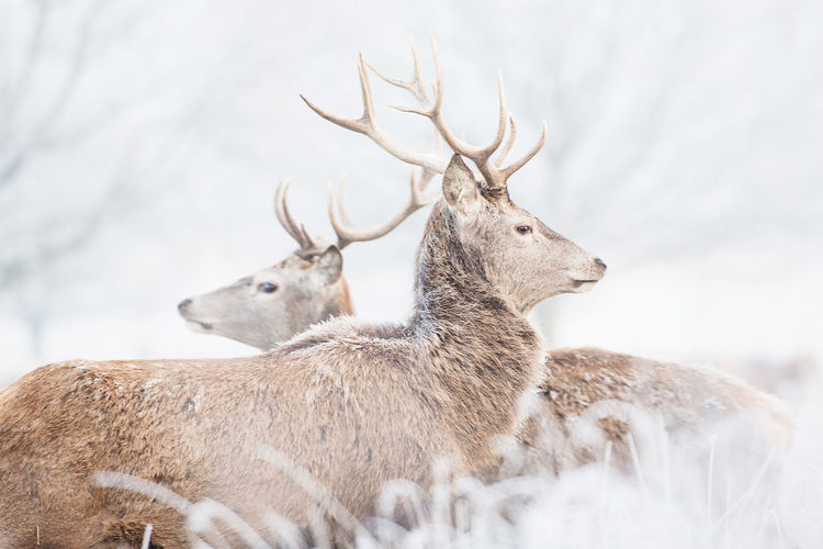 Low angle view of two deers