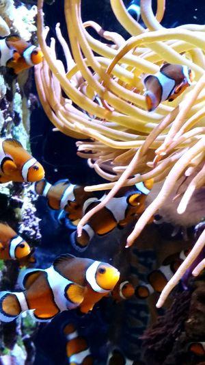 Nemo Monterrey Bay Aquarium