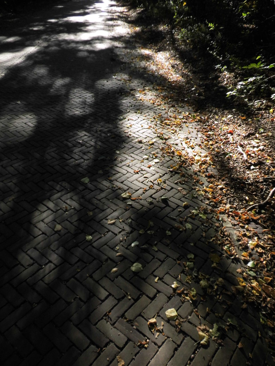 high angle view, day, sunlight, shadow, outdoors, no people, leaf, nature, close-up