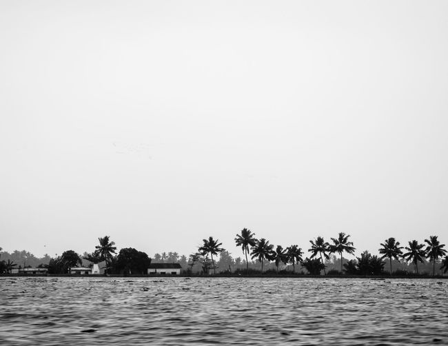 Day Black And White Blackandwhite Landscape_Collection Riverside Blackandwhite Palm Tree Beach Tree Sea Nature Landscape Water Outdoors Travel Scenics Silhouette Sky No People Vacations Travel Destinations An Eye For Travel My Best Photo