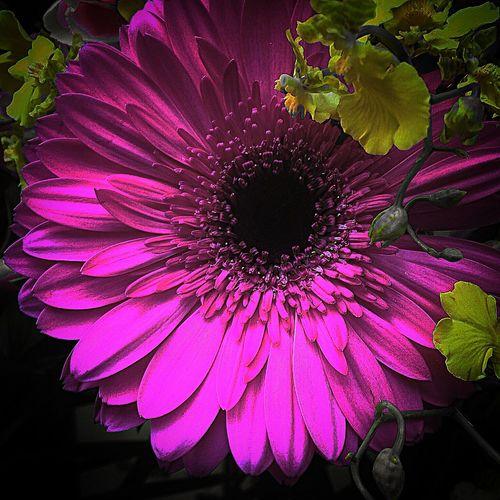 ピンクピンクピンク Flowers,Plants & Garden Flower Collection Flowers Flowerporn Pink Flower Pink 花 ピンク EyeEm Best Shots EyeEm Nature Lover
