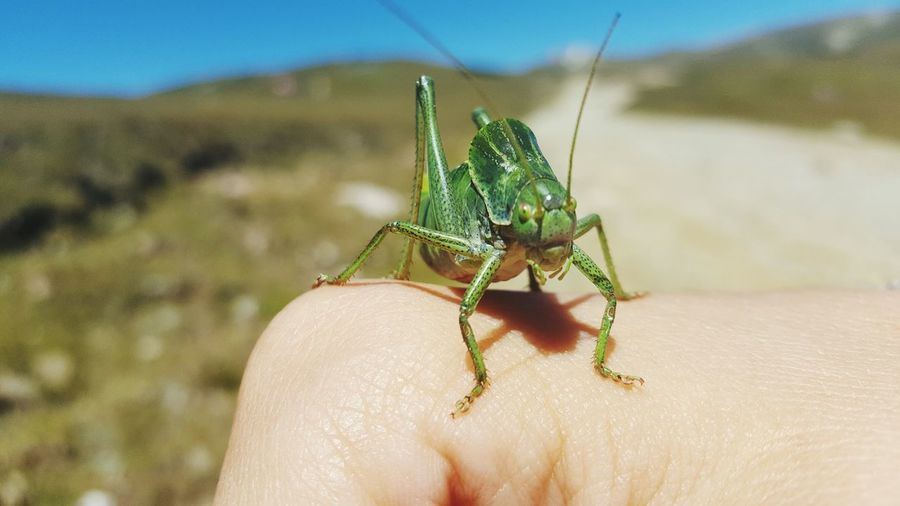 Cute grasshopper Grasshopper Green Color Human Body Part Human Hand One Animal One Person Human Finger Animal Wildlife Day Animals In The Wild Close-up Insect Nature
