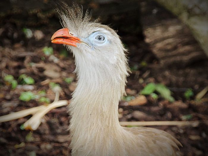 Tweet tweet Bird Zoo Animals  Unknown
