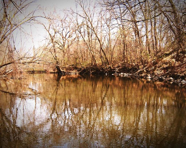 Minnesota Nature By The River Water Reflections Riverbank River View Canoeing Beautiful Day