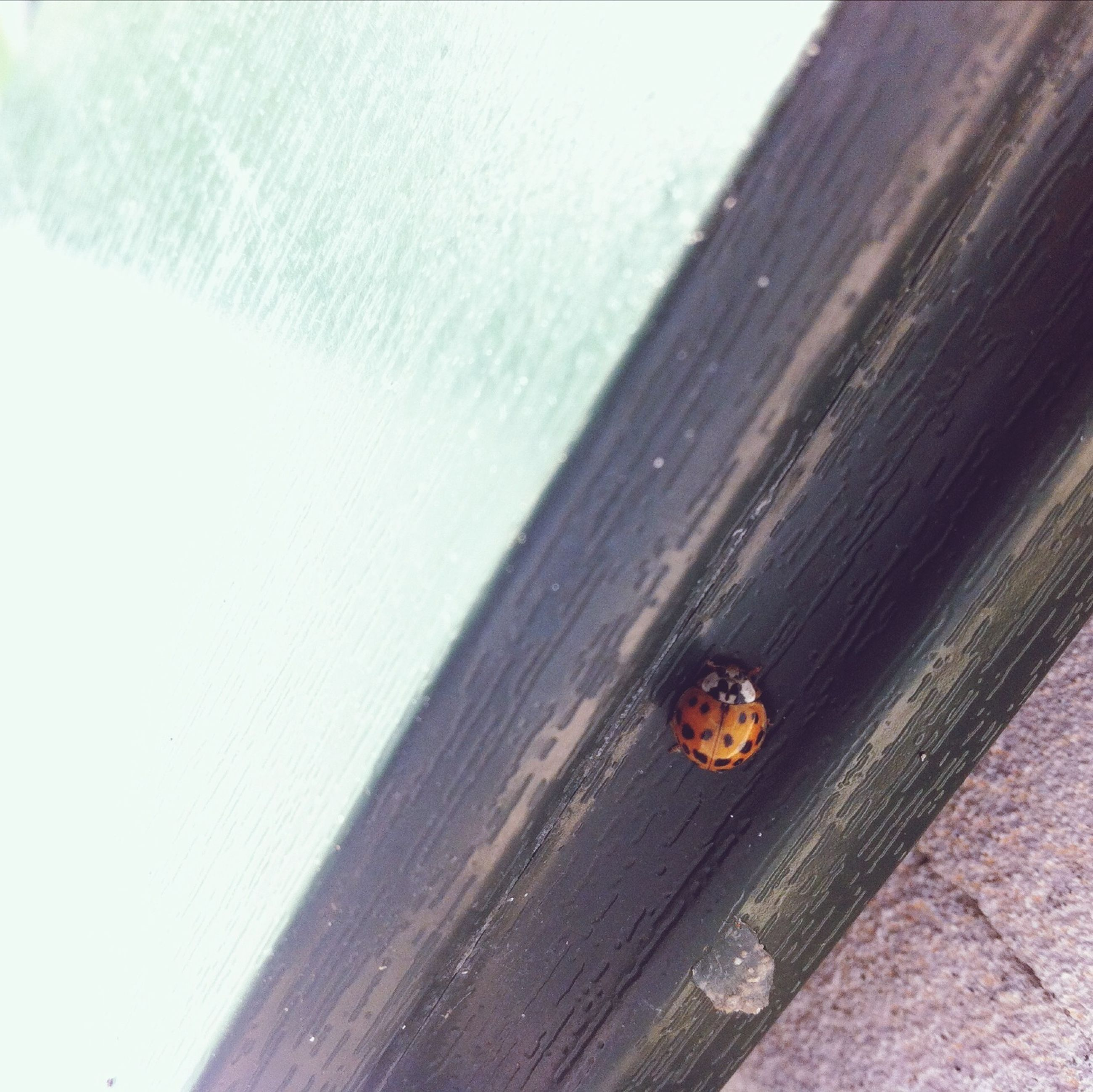 wood - material, insect, animal themes, wooden, animals in the wild, wildlife, one animal, plank, close-up, wood, nature, outdoors, day, textured, high angle view, wall - building feature, selective focus, no people, sunlight, water