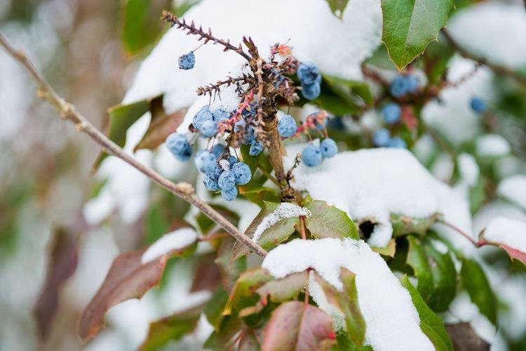 Berries in