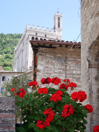 Red flowering plants by building
