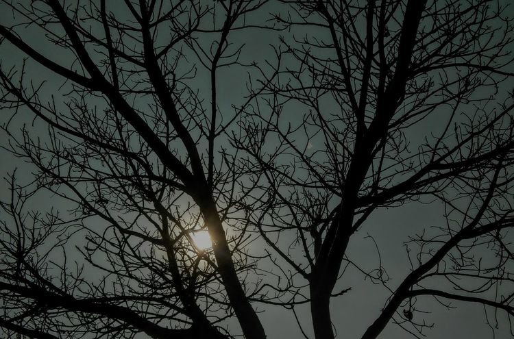 Shotonlenovo Sunny Day Trees And Sky Sky Clearweather Low Angle View Tree Nature Branch Bare Tree Sky Tranquility Beauty In Nature No People Outdoors Silhouette Day Scenics