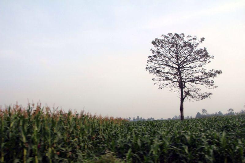 Single Tree In Farm Land Landscape Canon